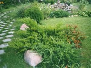 Озеленение двора и дома