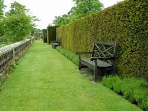 Живая изгородь - защита и украшение для участка