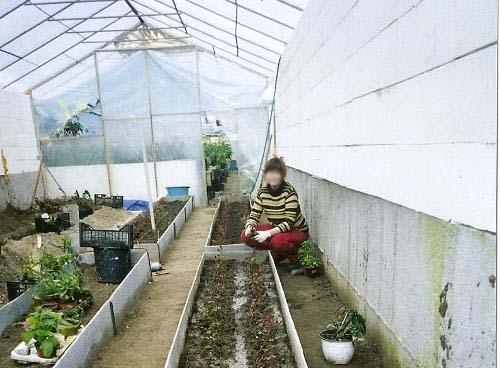 Высадка цветов в теплице-термос