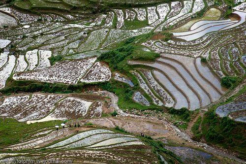 Земледелие во Вьетнаме