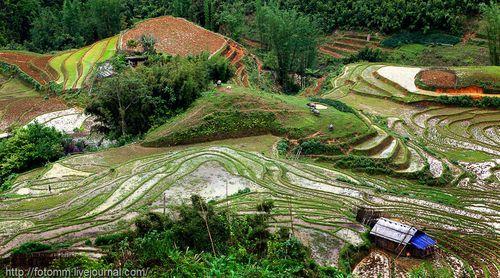 Террасные огороды