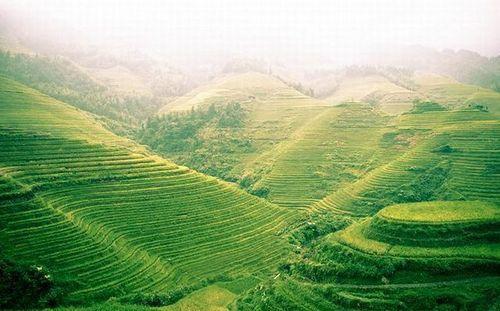 Зеленые рисовые террасы