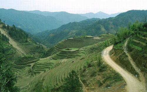 Поля из риса в горах