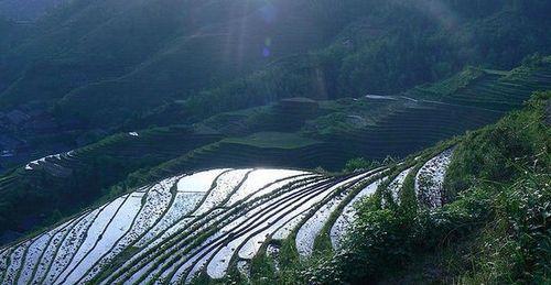 Красота рисовых террас