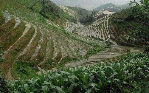 Террасы из риса