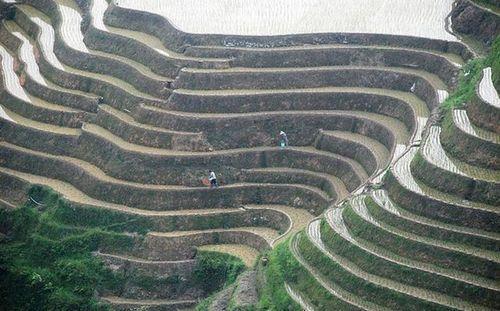 Красивые рисовые террасы в Китае