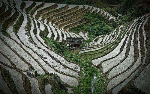 Китайские рисовые террасы