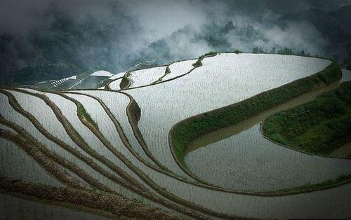 Рисовые террасы наполненные водой