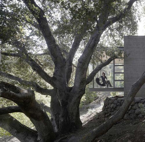 Дом в деревьях