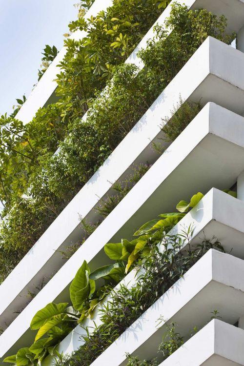 Балконы с растениями