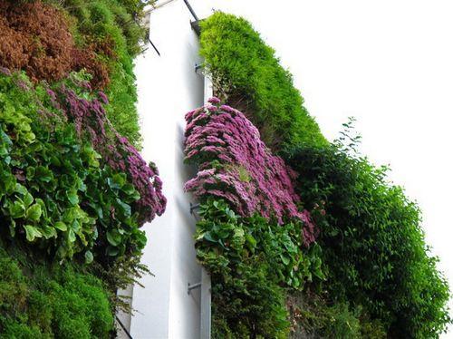 Фасад в растениях