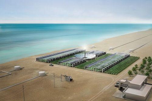 Sahara Forest Project - проект, который оживит пустыню