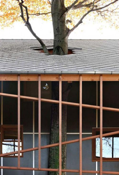 Дом с деревом