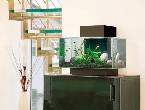 Типы аквариумов для интерьера