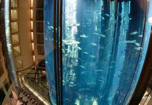 Aquadom – огромный аквариум в Radisson Blu Hotel