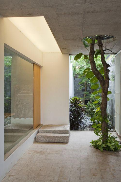 Дерево в доме M11 House