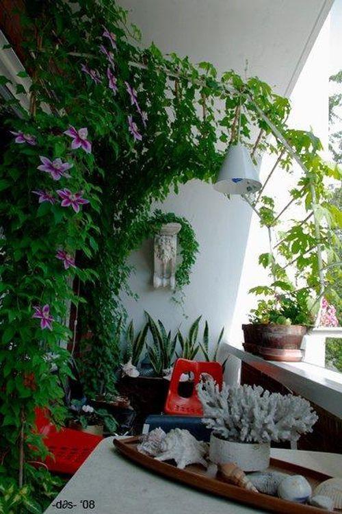 Дизайн балкона и лоджии. Озеленение растениями