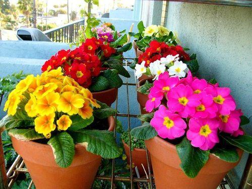 Цветы в дизайне балкона и лоджии