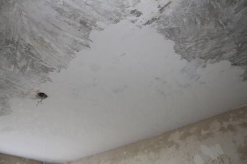 Шпаклевка потолка своими руками. Видео
