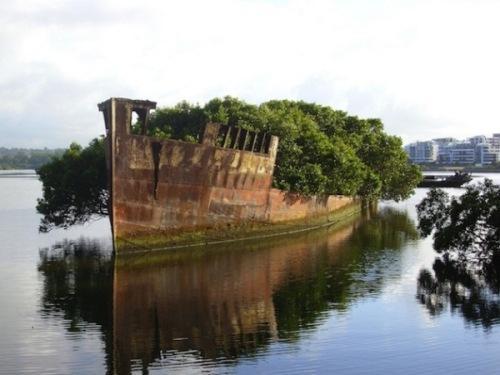 Плавающий лес на корабле SS Ayrfield. Фото 2