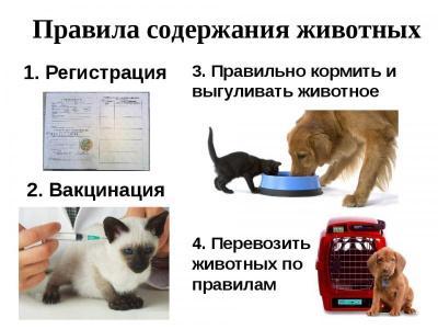 Какие правила гигиены и безопасности при обращении с животными?